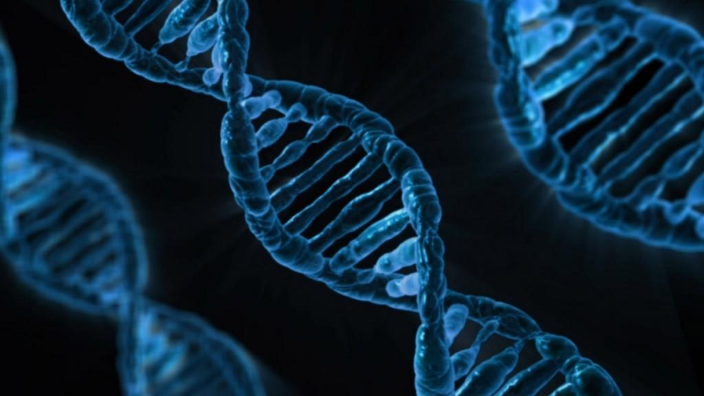 A ciência já reconhece a influência de fatores genéticos na obesidade.